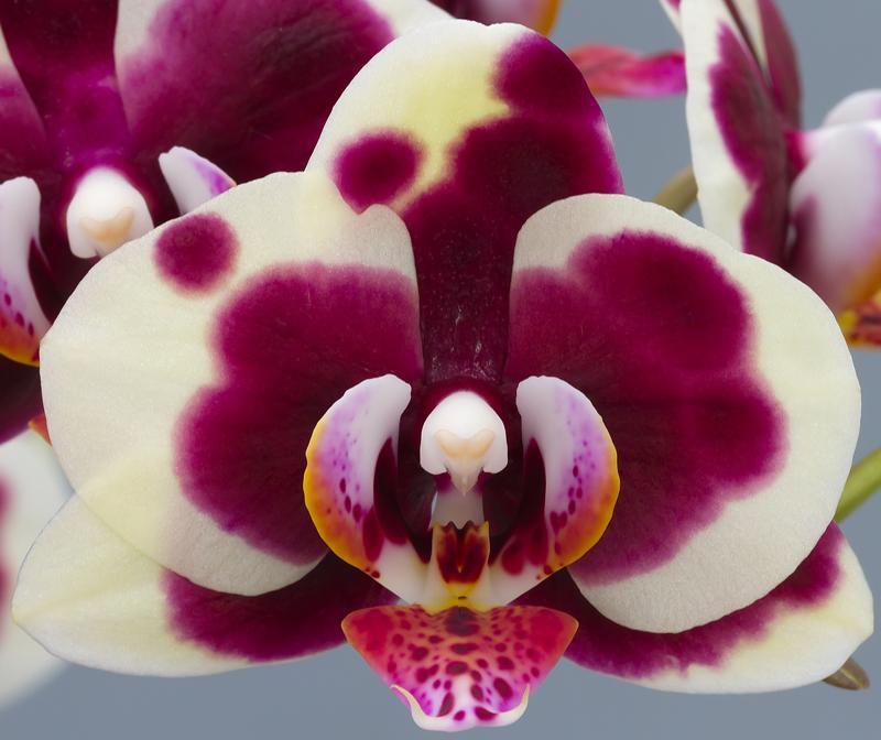 LaMaggia-bloem-web