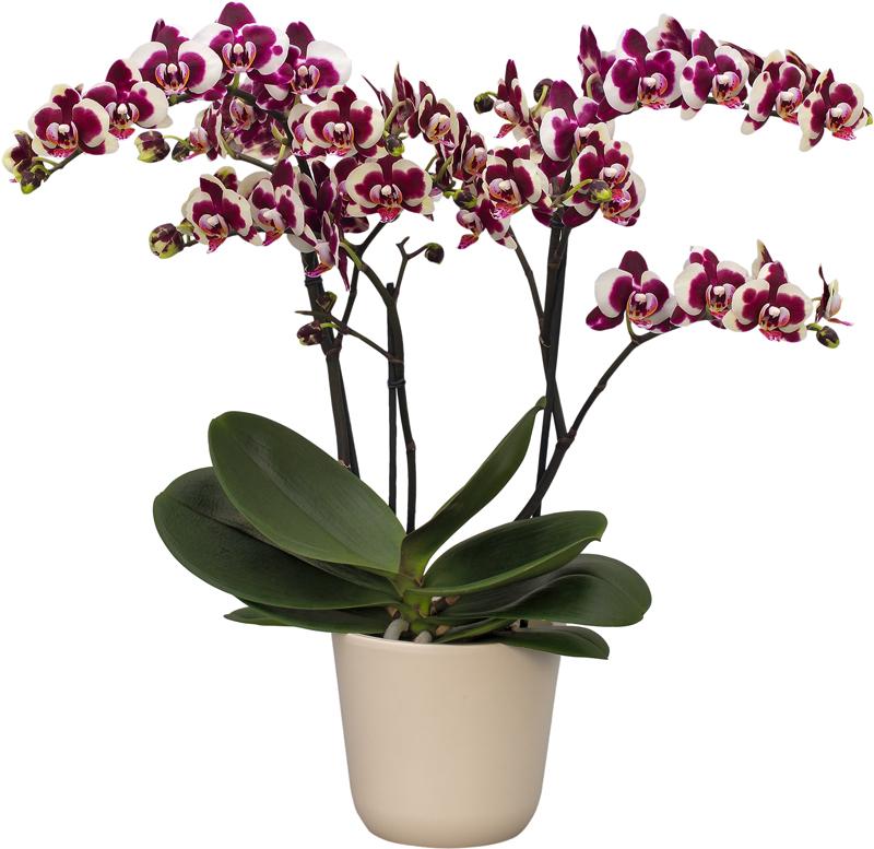 LaMaggia-plant-web