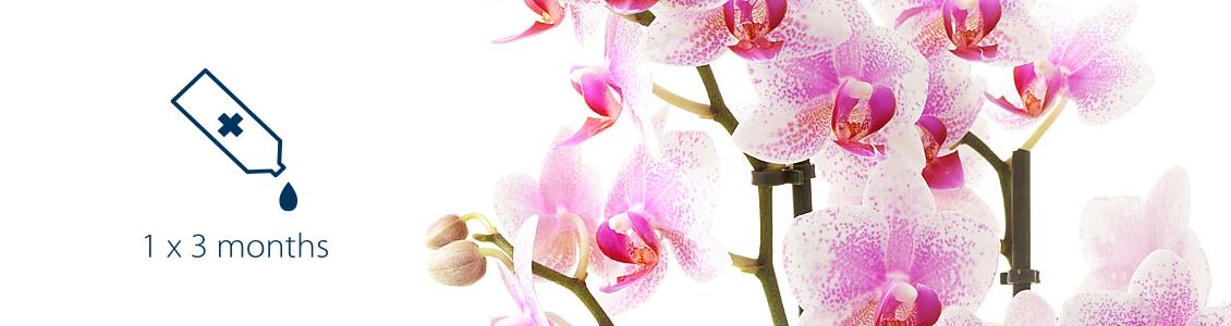 orchideen pflege pannekoek orchideeen. Black Bedroom Furniture Sets. Home Design Ideas
